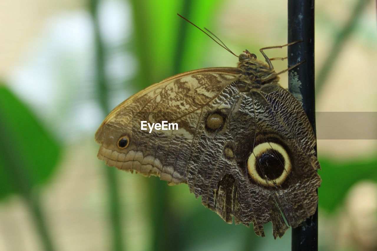 animal, animal themes, animal wildlife, animals in the wild, one animal, close-up, focus on foreground, insect, invertebrate, vertebrate, no people, nature, day, plant, selective focus, animal body part, reptile, outdoors, green color, animal antenna, butterfly - insect, animal eye, butterfly, animal scale