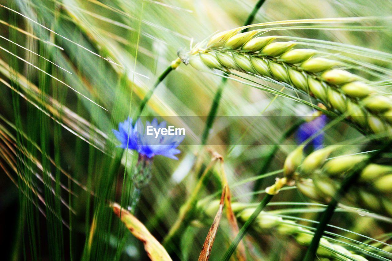 CLOSE-UP OF FLOWER GROWING IN GARDEN