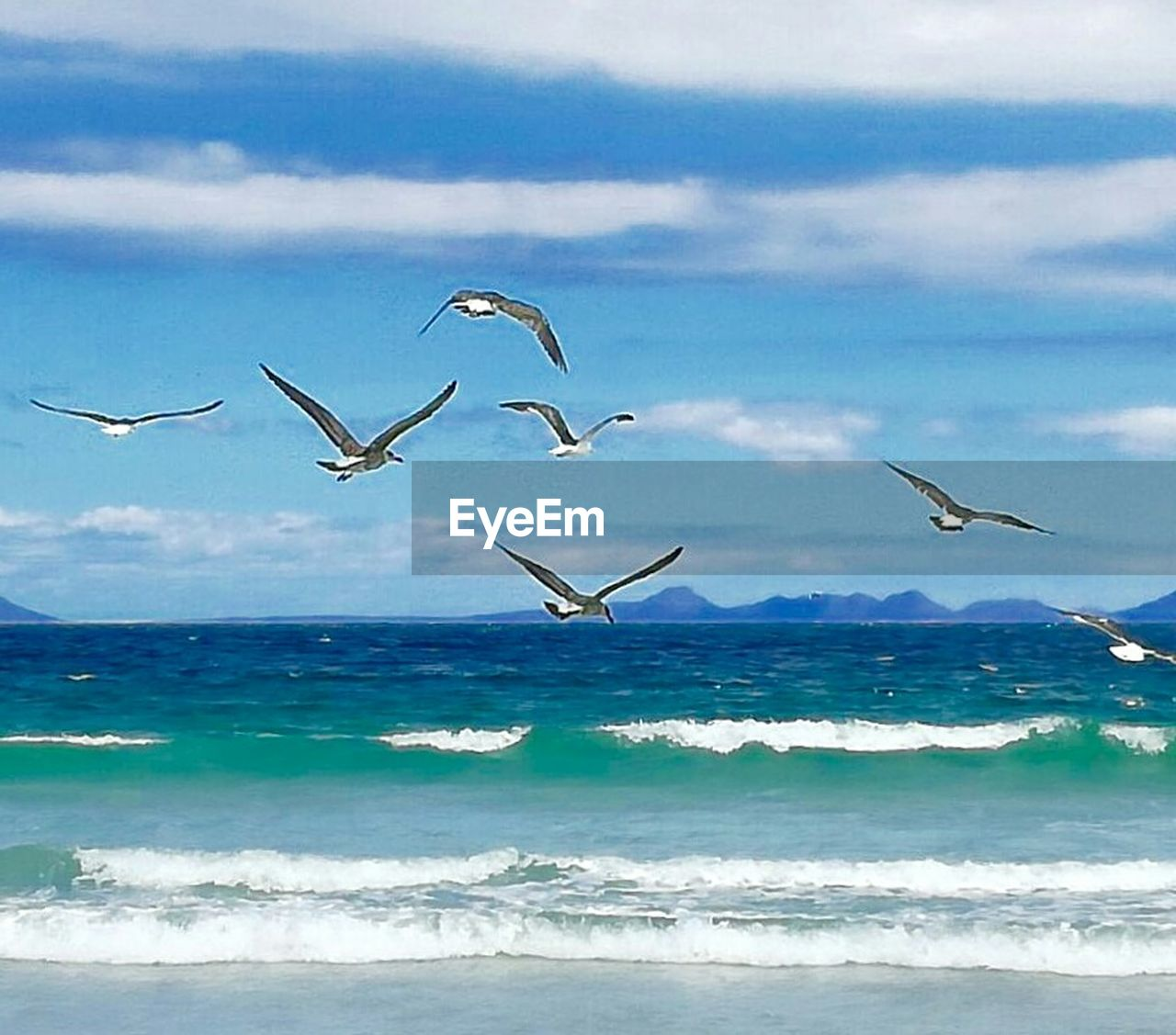 sea, animals in the wild, nature, flying, bird, water, horizon over water, animal themes, beauty in nature, animal wildlife, scenics, no people, large group of animals, beach, sky, outdoors, day, wave, spread wings, flamingo, mammal