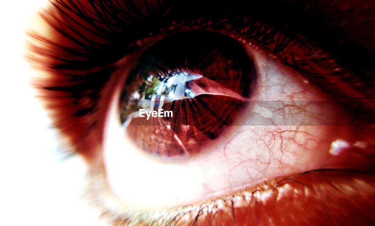 human eye, human body part, eyesight, one person, eyelash, real people, sensory perception, eyeball, close-up, looking at camera, iris - eye, portrait, day, outdoors, people