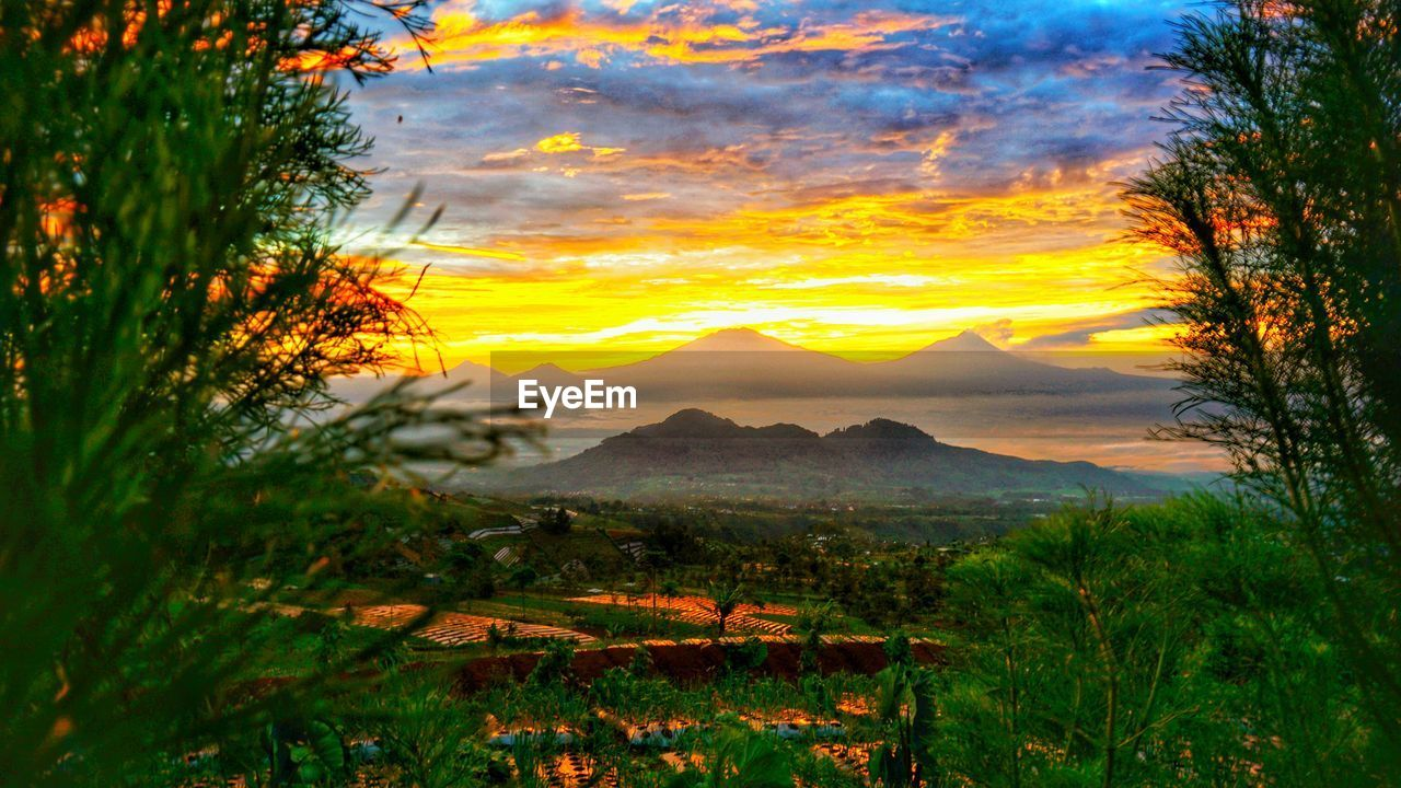 sunset, sky, beauty in nature, mountain, scenics - nature, tranquil scene, tranquility, plant, cloud - sky, orange color, nature, no people, environment, non-urban scene, landscape, idyllic, tree, mountain range, growth, land, outdoors, mountain peak