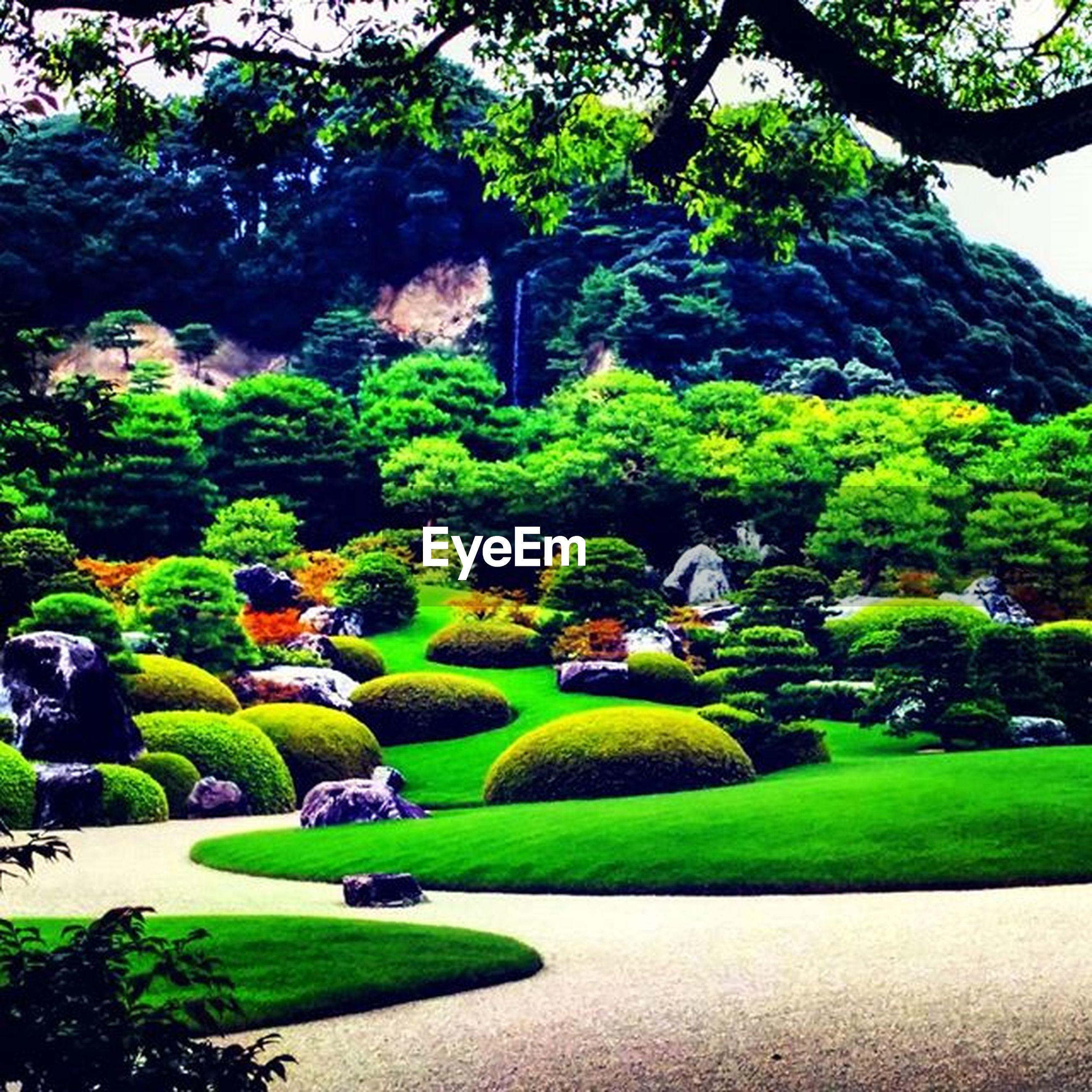 tree, green color, growth, park - man made space, nature, beauty in nature, tranquility, grass, formal garden, tranquil scene, park, sunlight, garden, plant, lawn, shadow, scenics, green, lush foliage, outdoors