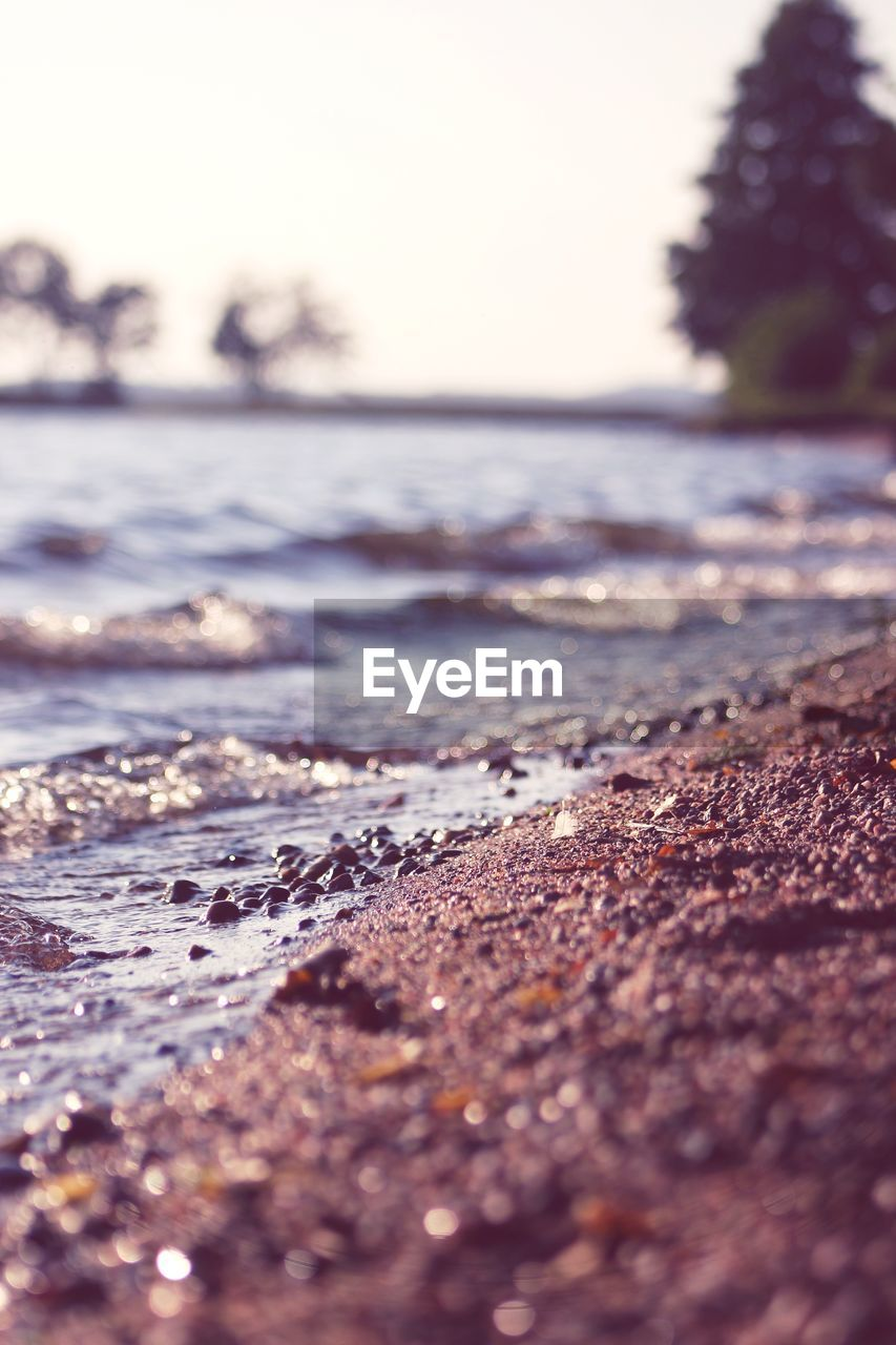 selective focus, land, surface level, water, nature, no people, day, beach, sky, sea, tranquility, outdoors, close-up, wave, clear sky, tree, beauty in nature, scenics - nature, motion