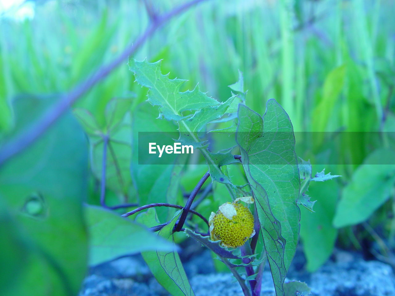 leaf, plant part, green color, plant, growth, close-up, nature, food and drink, food, no people, selective focus, freshness, day, beauty in nature, healthy eating, fruit, outdoors, land, focus on foreground, field