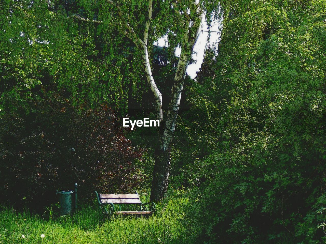 plant, tree, nature, growth, land, grass, forest, seat, foliage, bench, park, lush foliage, outdoors, environment, no people, front or back yard, tranquility, day, green color, relaxation