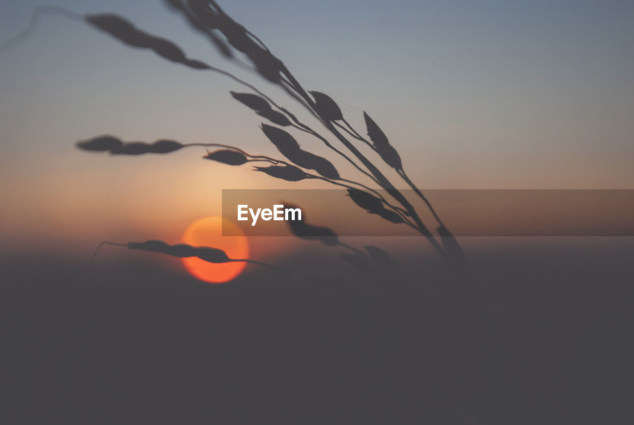 sky, sunset, beauty in nature, silhouette, tranquility, growth, nature, orange color, scenics - nature, no people, tranquil scene, sun, plant, focus on foreground, outdoors, close-up, copy space, sunlight, idyllic, non-urban scene