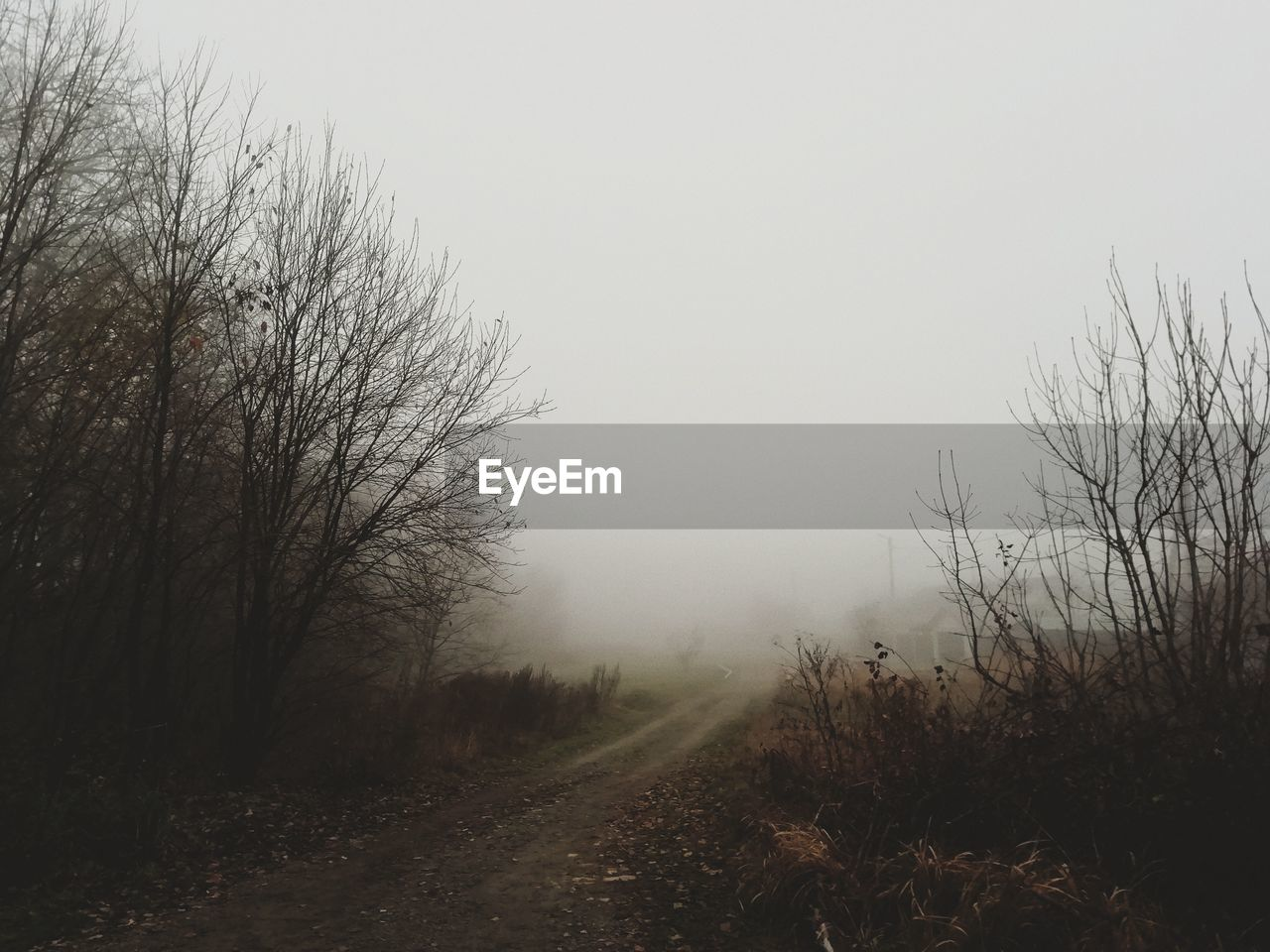 fog, sky, tree, plant, tranquility, nature, tranquil scene, beauty in nature, no people, landscape, bare tree, land, environment, scenics - nature, non-urban scene, the way forward, direction, field, outdoors, hazy