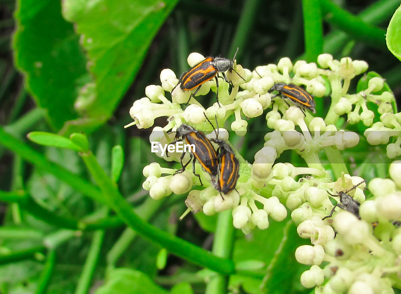 insect, animal themes, animals in the wild, one animal, flower, nature, green color, plant, wildlife, day, growth, animal wildlife, outdoors, no people, leaf, fragility, beauty in nature, close-up, flower head, bee, freshness