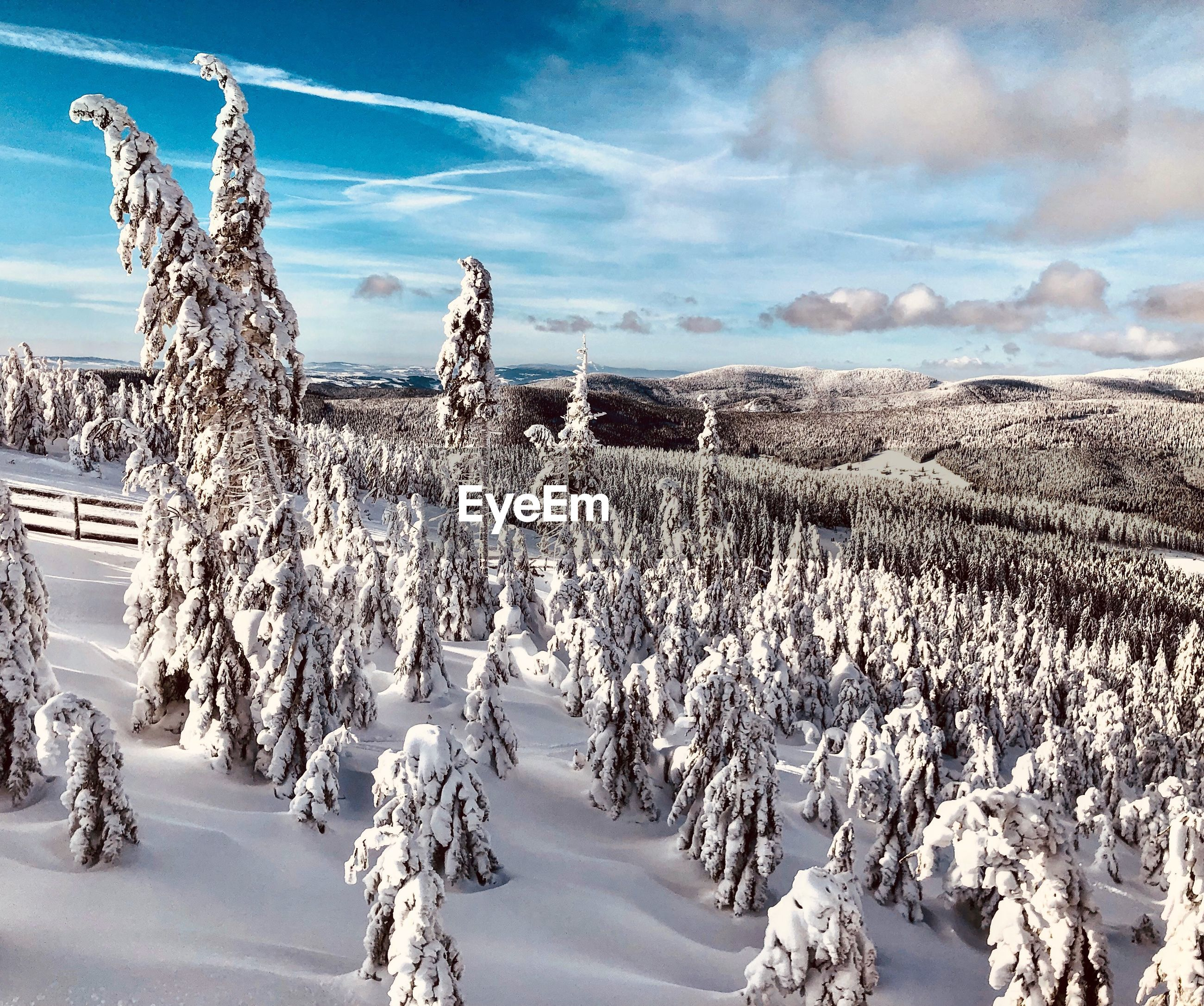 PANORAMIC SHOT OF TREES ON SNOW COVERED FIELD