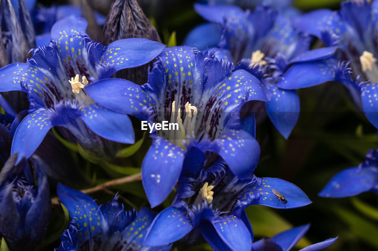 flower, flowering plant, plant, vulnerability, petal, fragility, beauty in nature, close-up, purple, freshness, growth, flower head, inflorescence, nature, selective focus, drop, no people, water, pollen, wet, outdoors, raindrop, bunch of flowers, dew, iris - plant