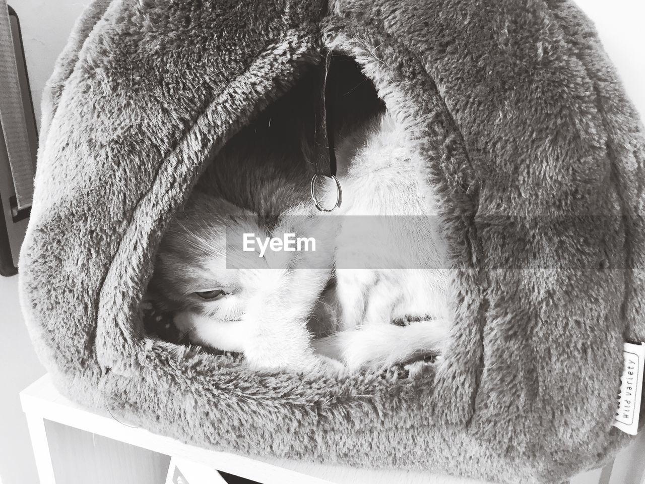 animal themes, mammal, animal, domestic, domestic animals, cat, pets, feline, domestic cat, one animal, vertebrate, relaxation, indoors, no people, close-up, resting, sleeping, whisker, animal body part, portrait, animal head
