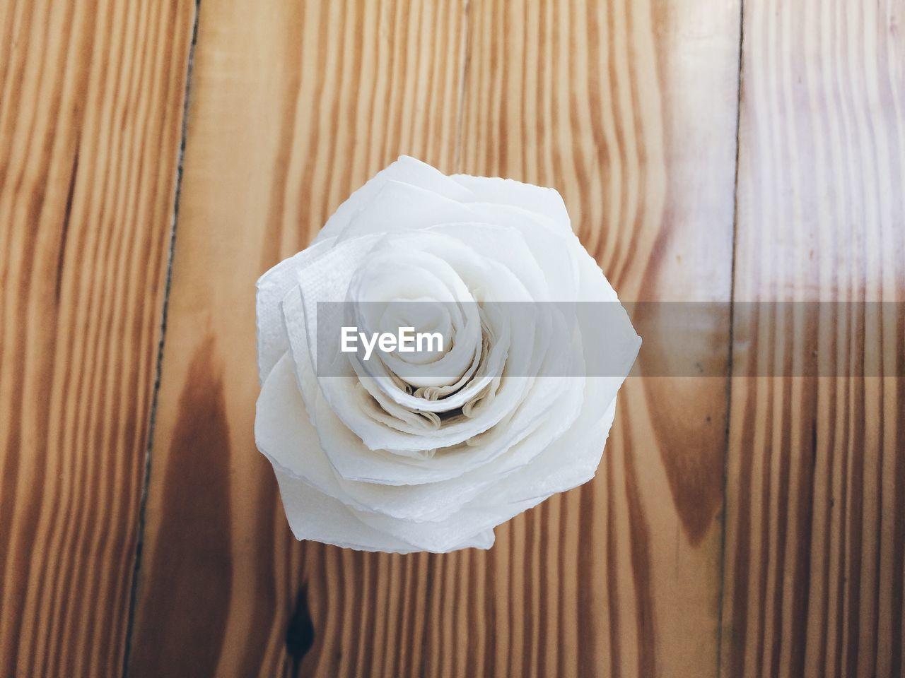 Close-up of fresh rose