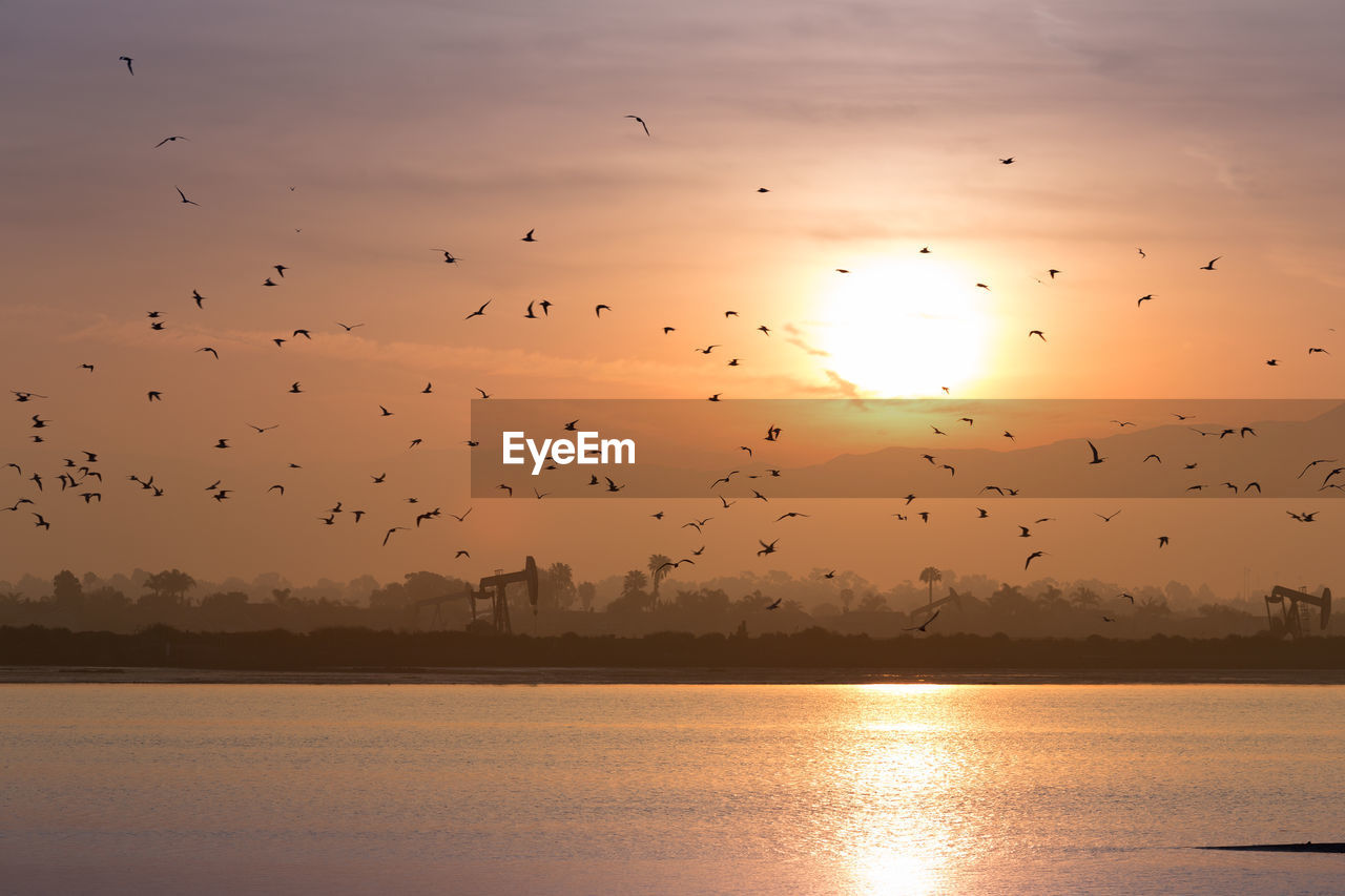 Silhouette Birds Flying Over River During Sunset