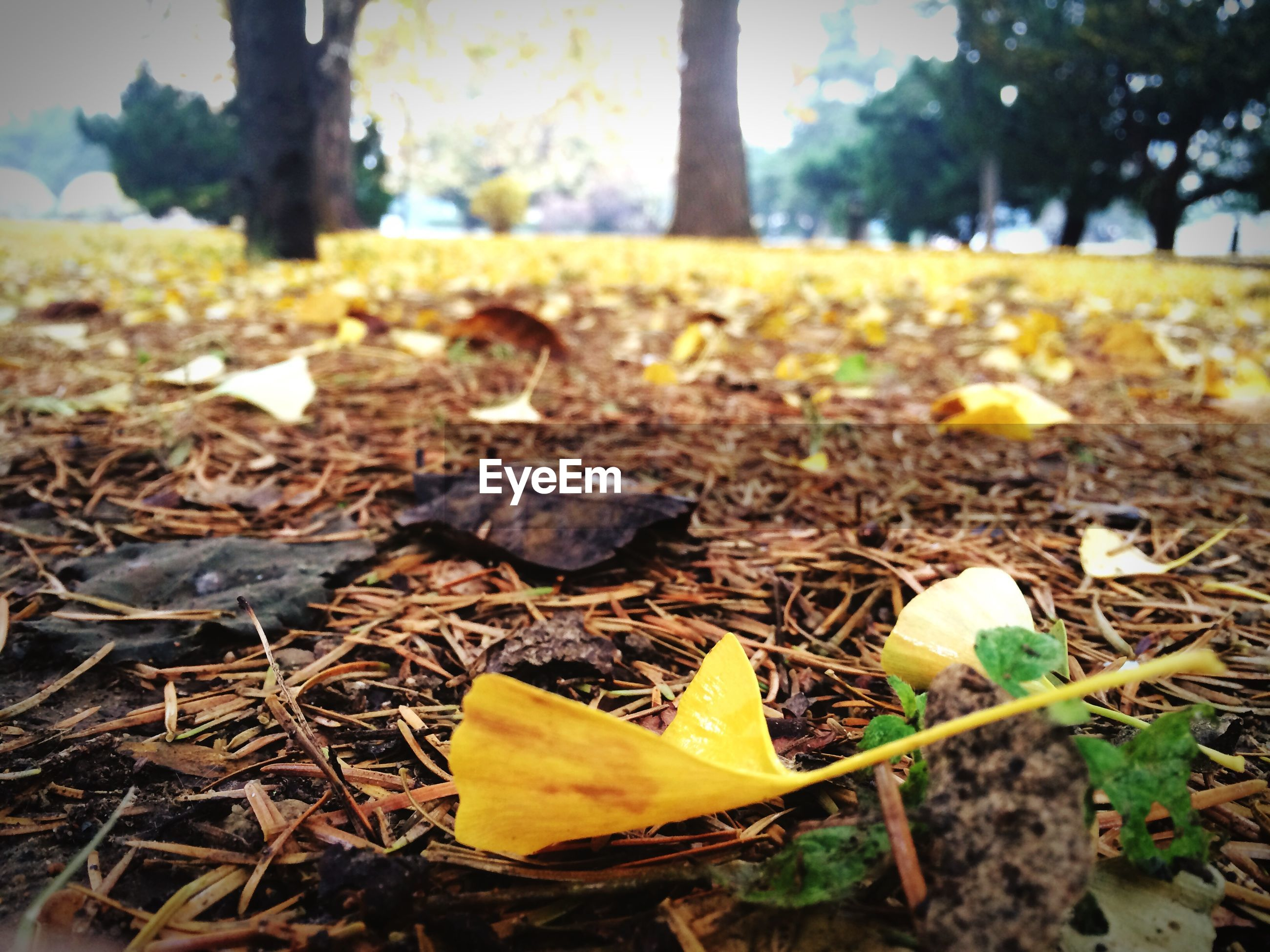 leaf, autumn, yellow, dry, change, focus on foreground, field, season, nature, fallen, leaves, selective focus, close-up, growth, surface level, fragility, day, grass, beauty in nature, tranquility