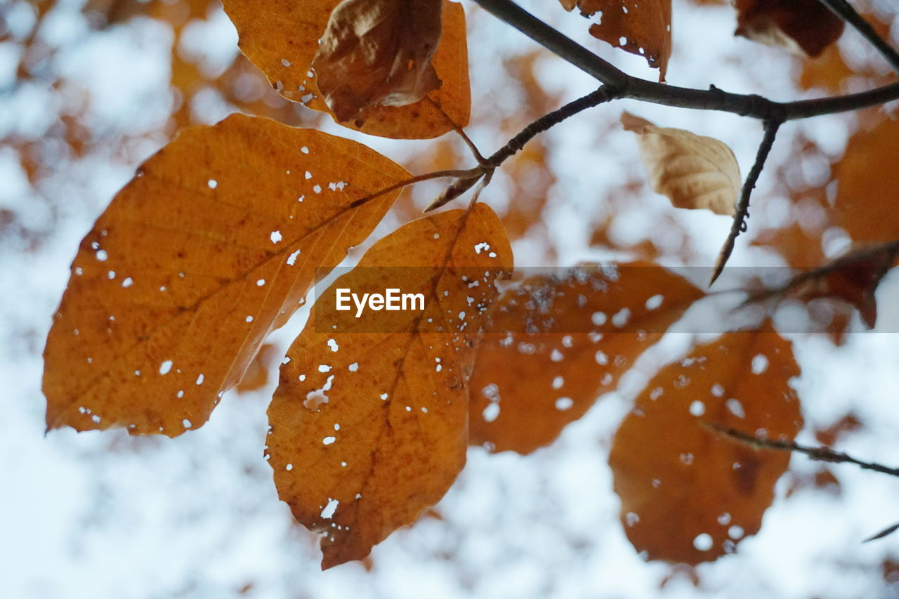 Close-up of snow on tree during winter