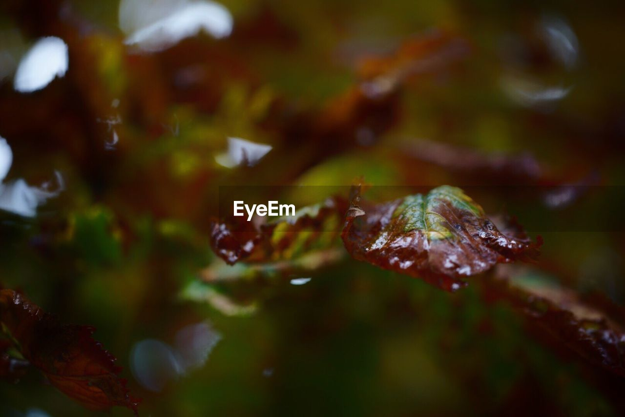 nature, drop, close-up, leaf, no people, beauty in nature, autumn, growth, water, day, outdoors, fragility
