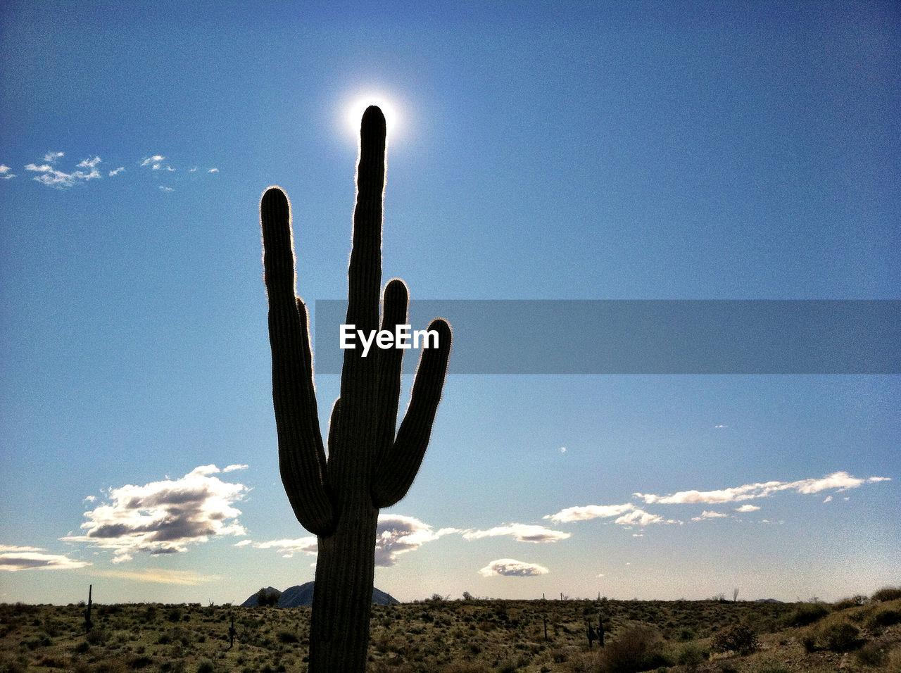 Cactus on landscape against blue sky