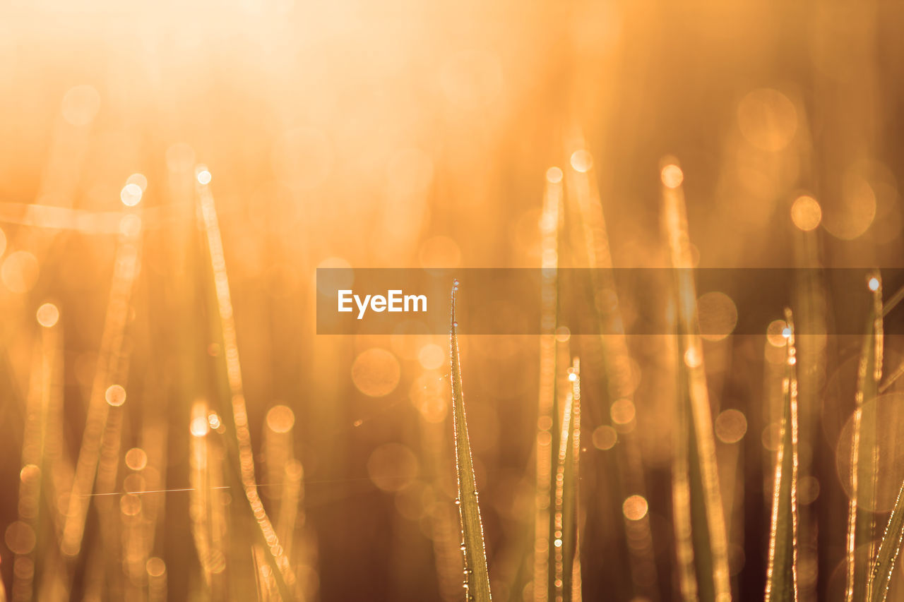selective focus, no people, close-up, focus on foreground, light - natural phenomenon, defocused, lens flare, nature, wet, orange color, illuminated, drop, night, outdoors, abstract, plant, backgrounds, pattern, gold colored, growth