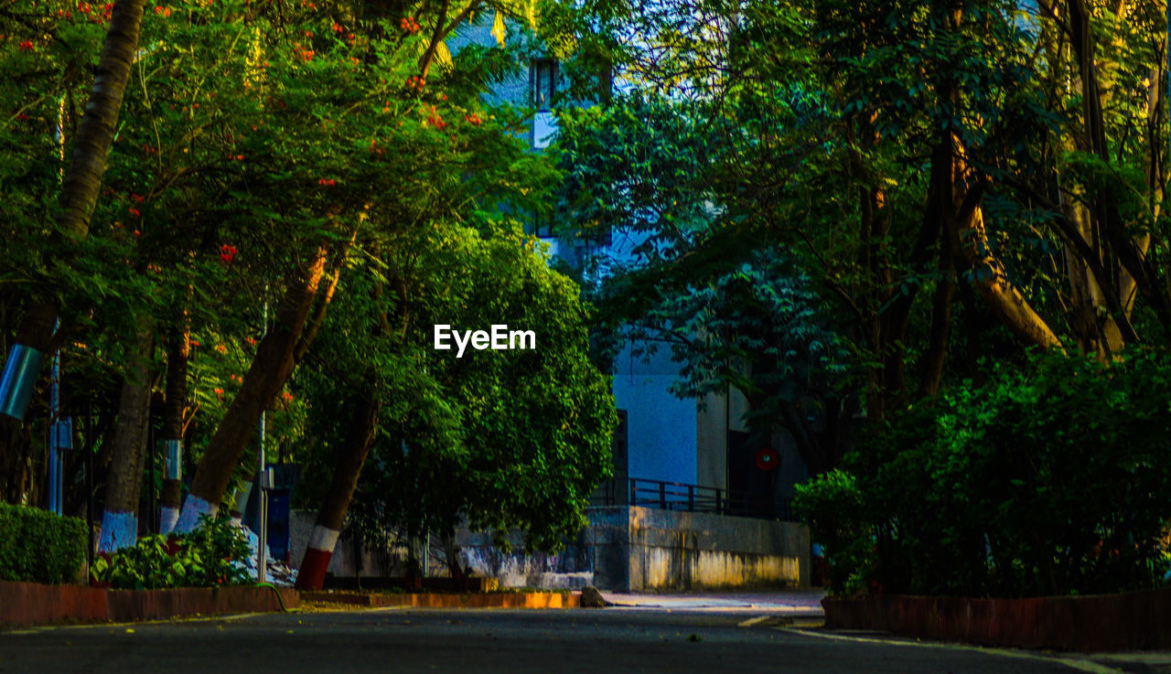 tree, plant, night, city, architecture, nature, growth, illuminated, no people, street, built structure, building exterior, road, green color, outdoors, transportation, building, dusk, multi colored, beauty in nature