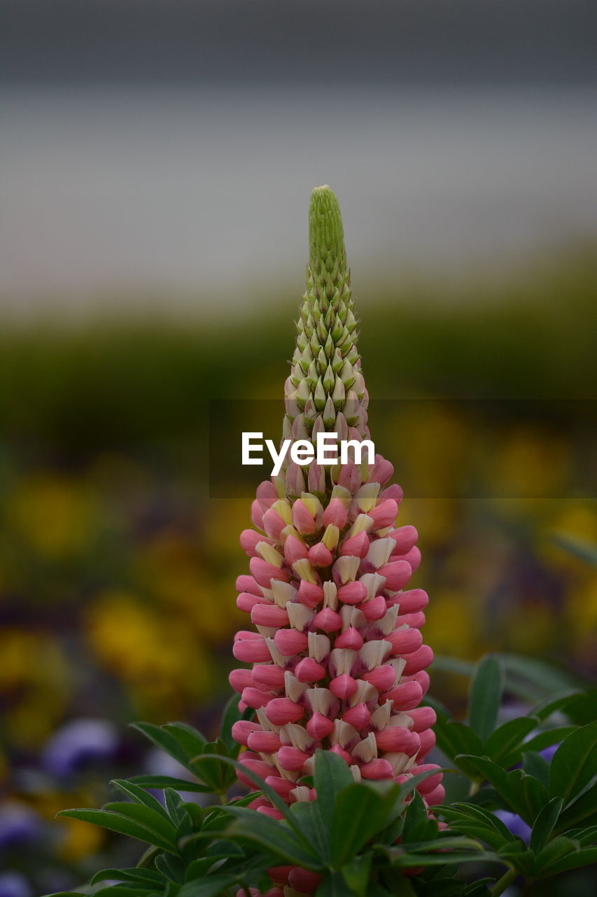 growth, nature, green color, plant, focus on foreground, beauty in nature, no people, outdoors, cactus, field, day, flower, close-up, freshness, fragility