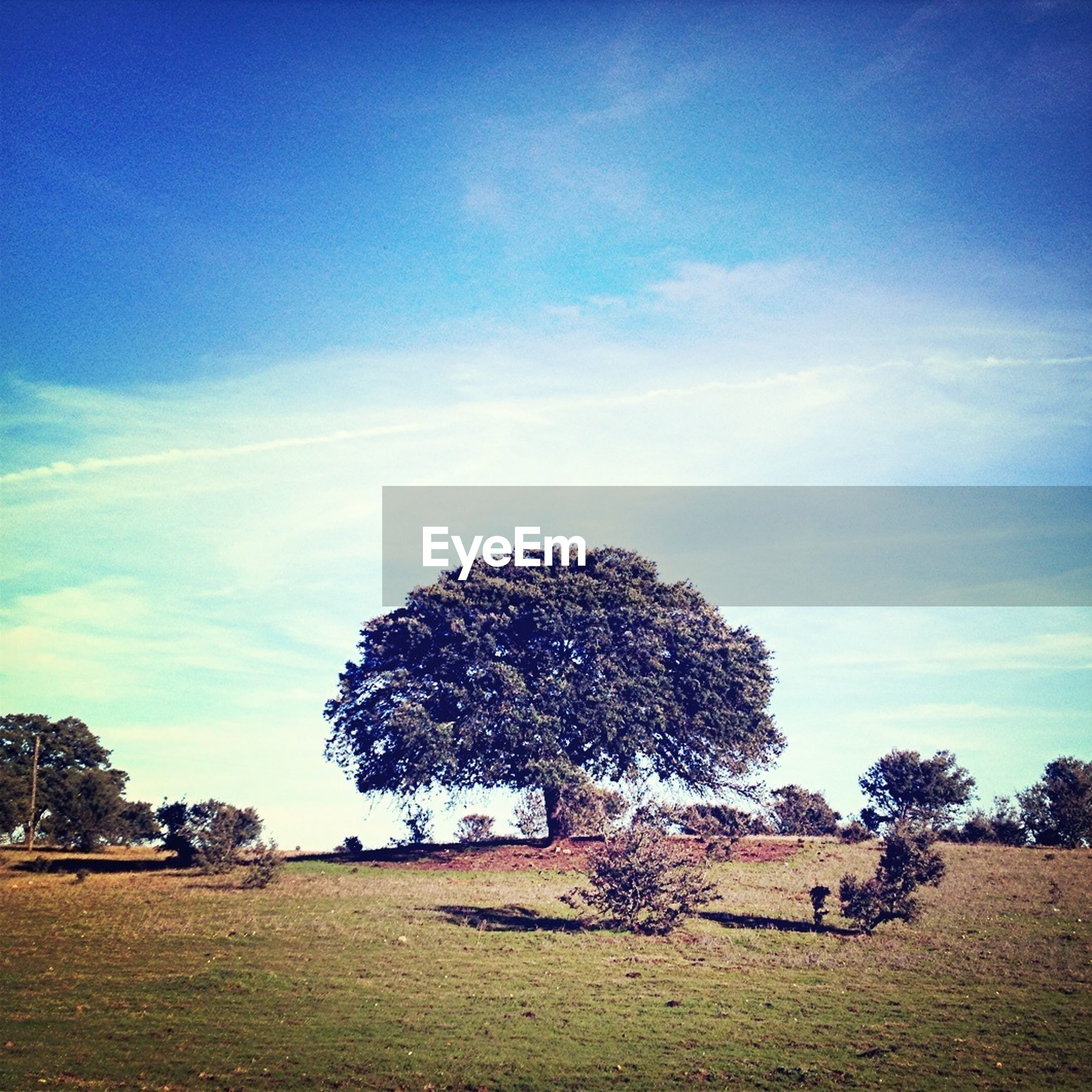 tree, sky, field, blue, landscape, tranquility, tranquil scene, growth, nature, grass, sunlight, beauty in nature, cloud - sky, scenics, day, outdoors, cloud, rural scene, shadow, plant
