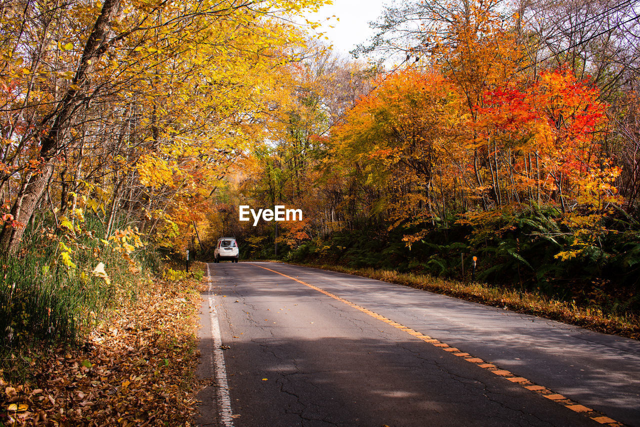 autumn, tree, change, plant, road, the way forward, transportation, direction, no people, nature, beauty in nature, orange color, day, leaf, plant part, tranquility, marking, road marking, sign, outdoors, dividing line, autumn collection