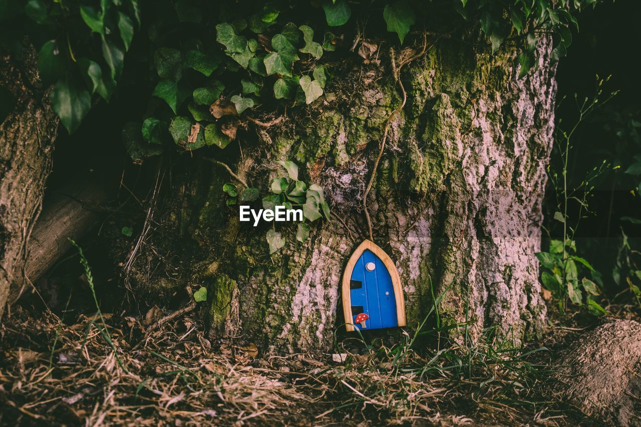 trunk, tree trunk, tree, plant, nature, land, no people, growth, leaf, plant part, forest, day, outdoors, field, wood - material, sign, close-up, communication, moss, bark