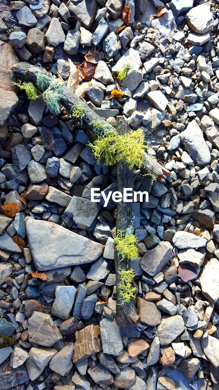high angle view, no people, day, growth, nature, outdoors, plant, green color, rock - object, pebble, sunlight, close-up