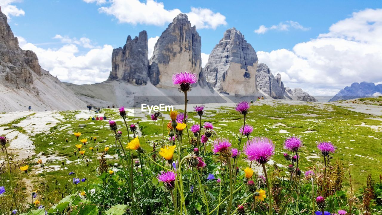 Flowers Blooming On Field Against Rock Formations