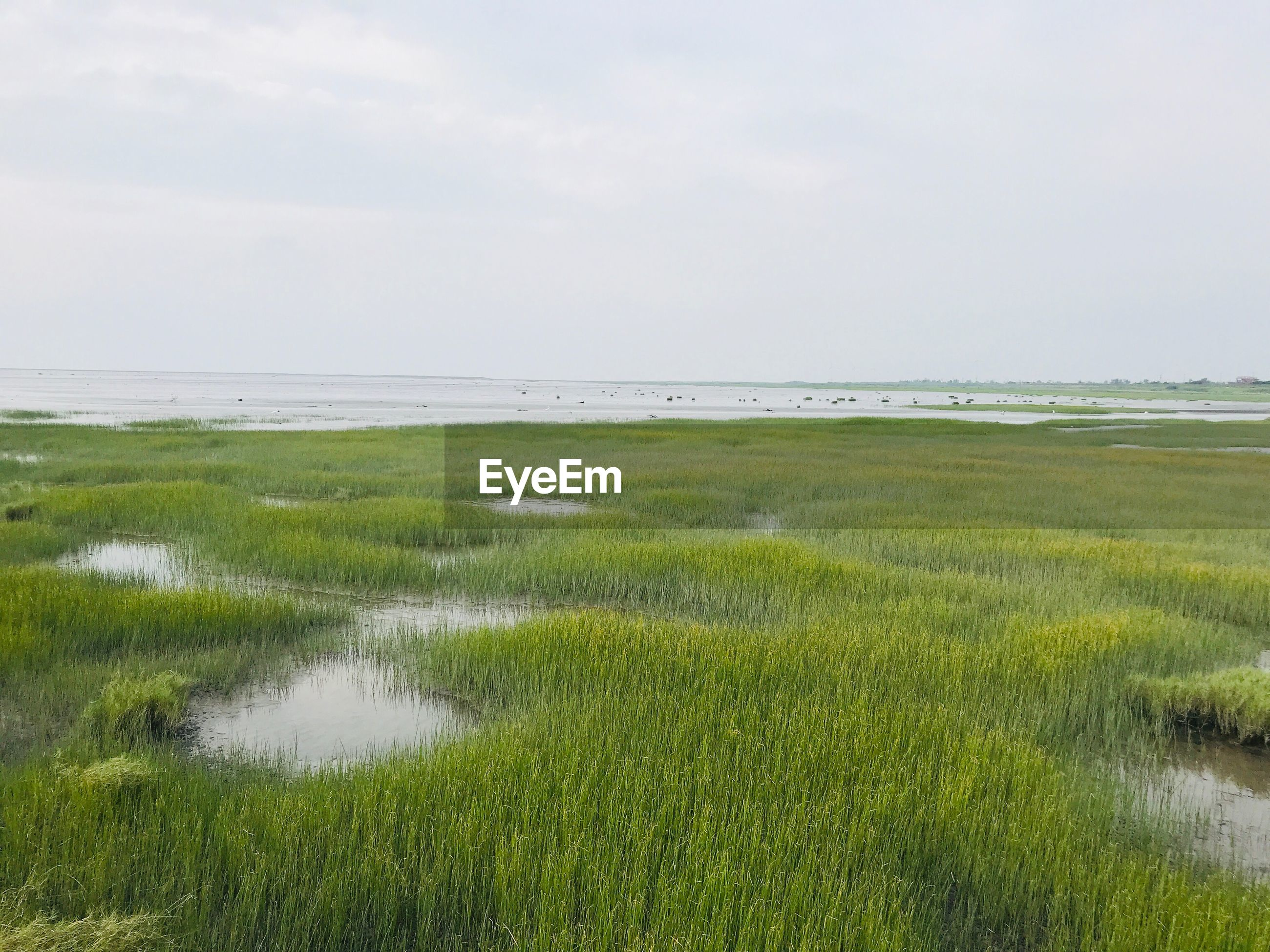 SCENIC VIEW OF SEA AND GRASS AGAINST SKY