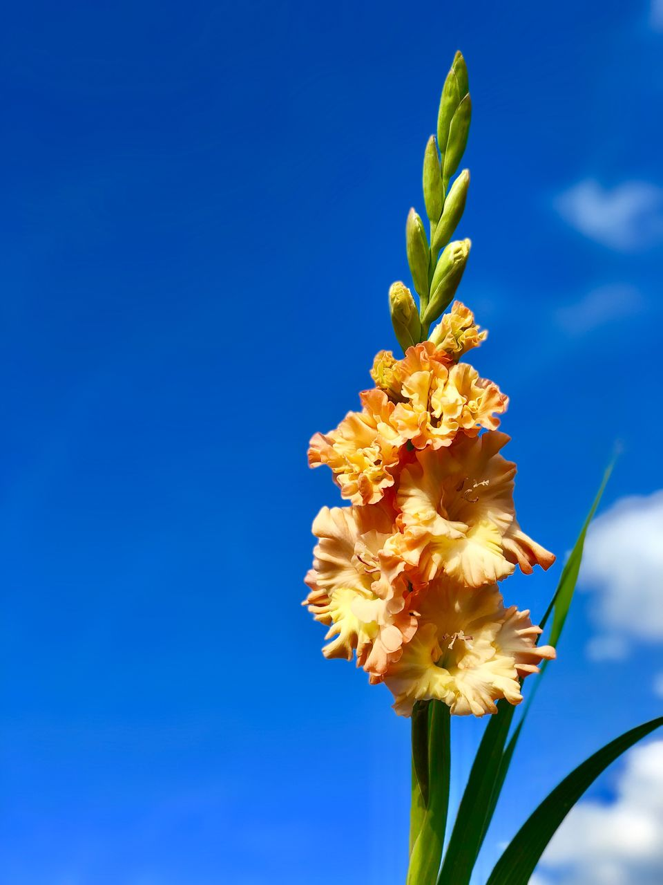 flowering plant, flower, freshness, plant, fragility, vulnerability, beauty in nature, growth, petal, close-up, yellow, blue, nature, flower head, inflorescence, copy space, no people, day, sky, plant stem, outdoors, pollen, blue background, sepal, flower arrangement