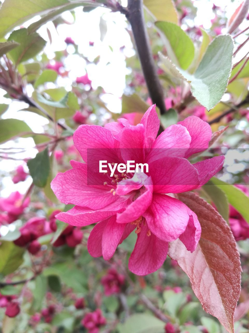 beauty in nature, growth, flower, pink color, nature, petal, fragility, no people, day, freshness, tree, close-up, outdoors, flower head, blooming, branch, plant