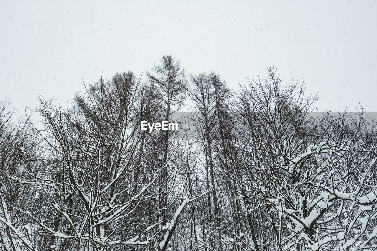 tree, bare tree, plant, branch, cold temperature, no people, sky, winter, snow, tranquility, nature, beauty in nature, day, low angle view, clear sky, outdoors, tranquil scene, scenics - nature, white color, snowing