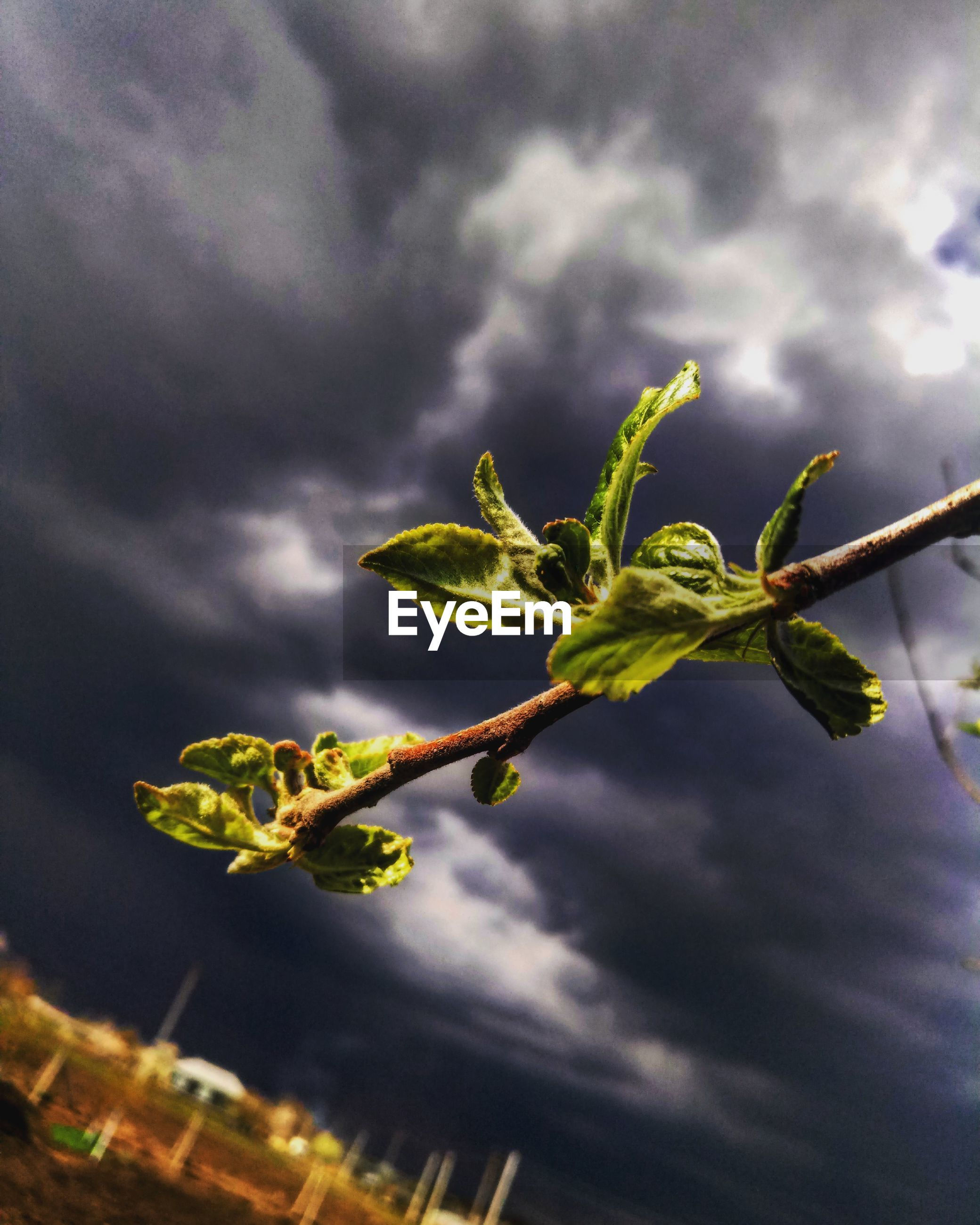 growth, nature, cloud - sky, sky, plant, no people, fragility, outdoors, leaf, beauty in nature, day, flower, low angle view, close-up, freshness, storm cloud, tree