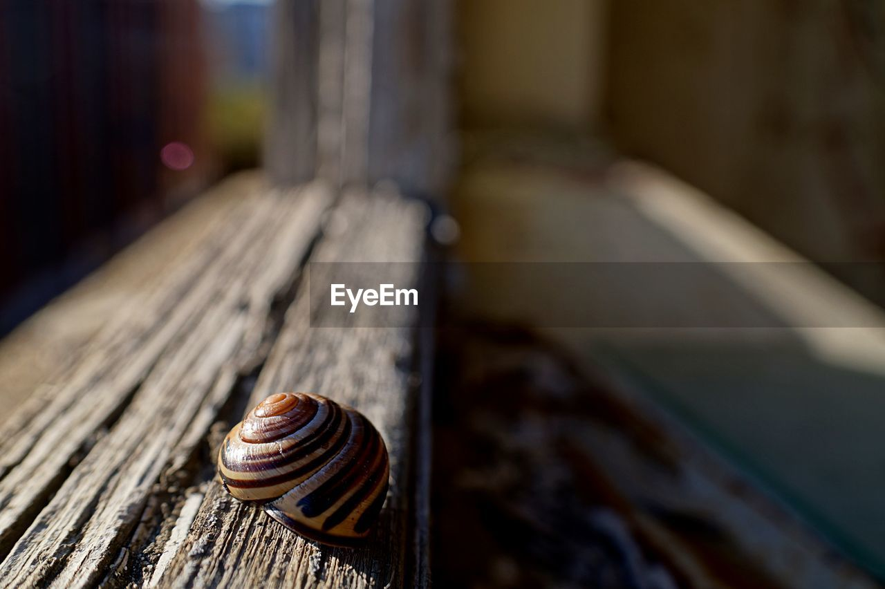 Close-up of snail on wood in abandoned building