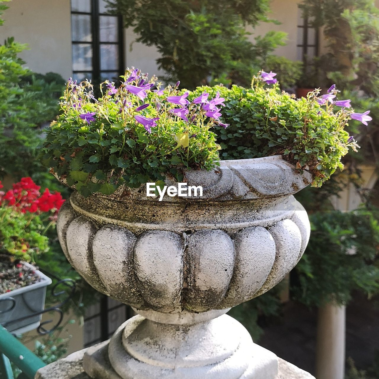 plant, flower, flowering plant, growth, nature, day, potted plant, no people, close-up, garden, architecture, beauty in nature, focus on foreground, outdoors, art and craft, park, flower pot, park - man made space, formal garden, front or back yard, gardening