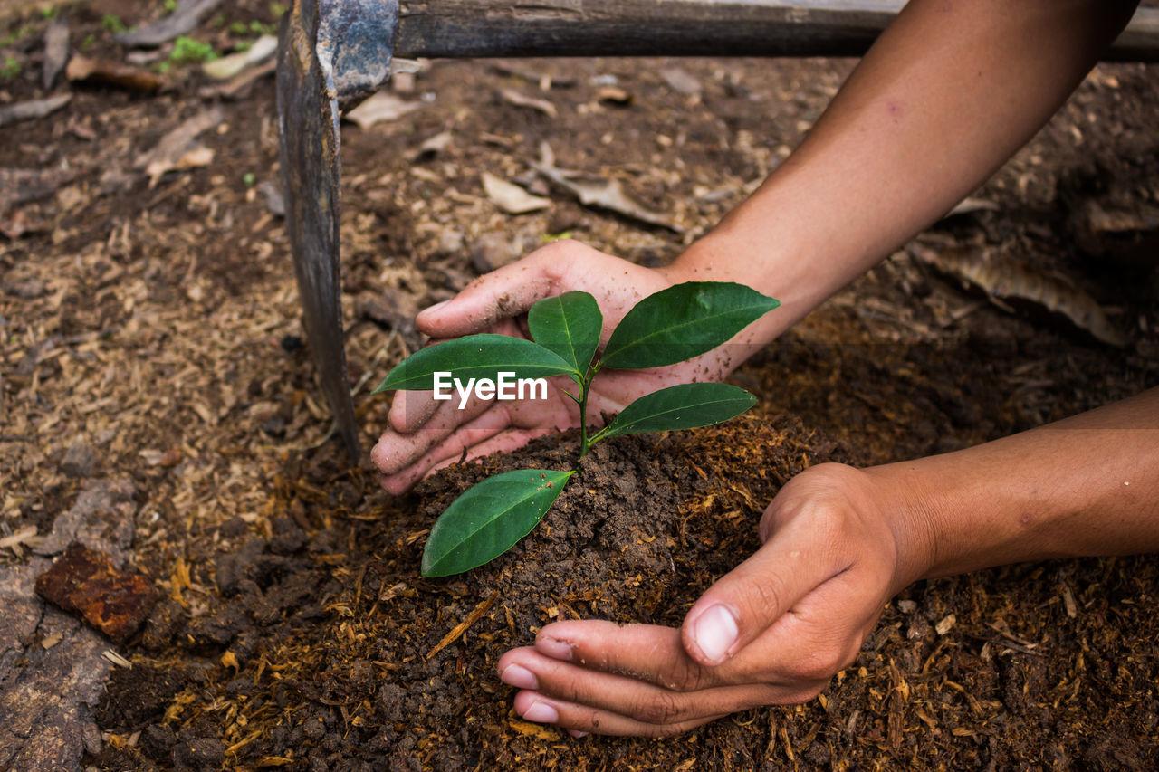 Close-Up Of Woman Planting Sapling