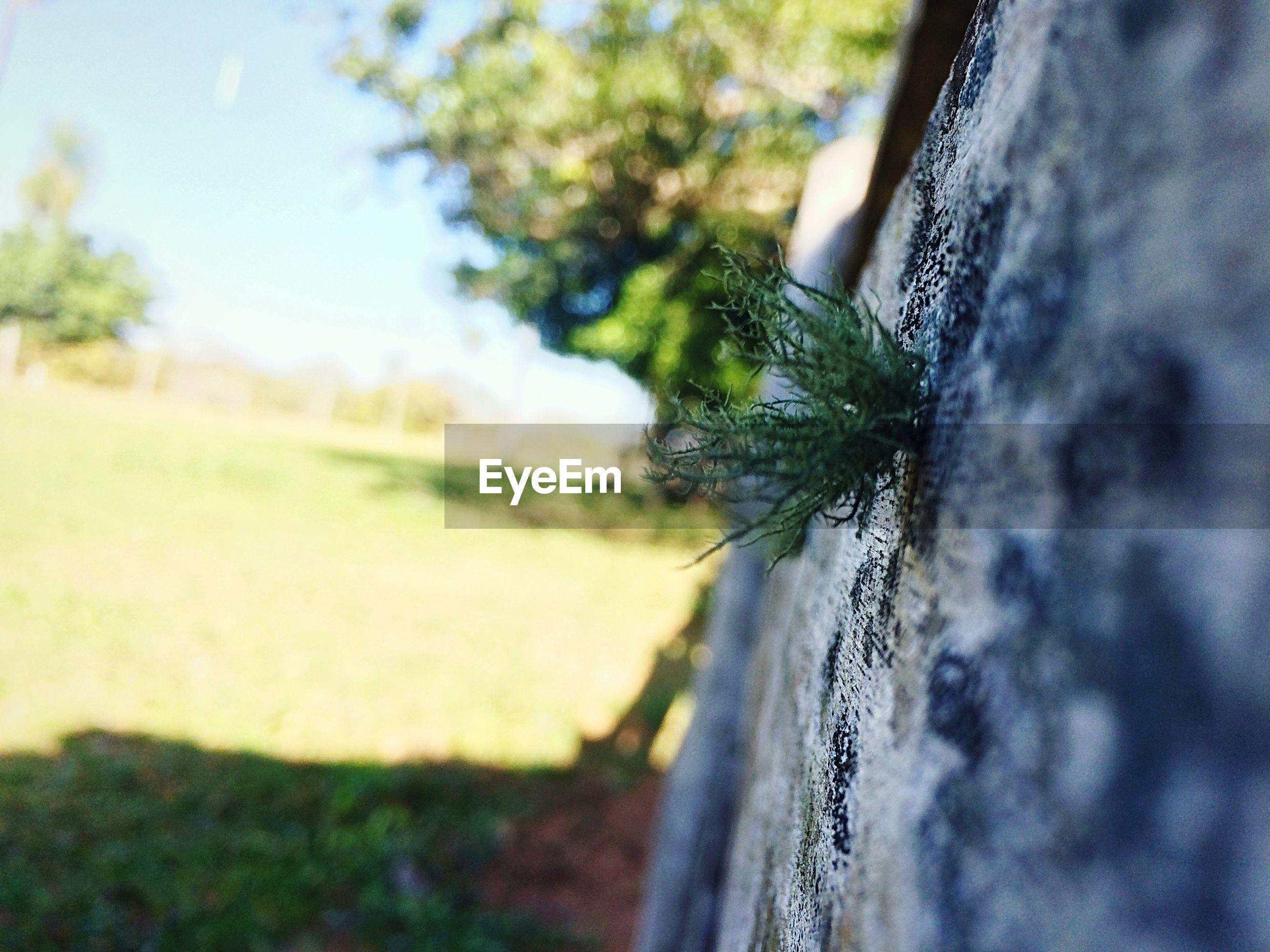 CLOSE-UP OF CATERPILLAR ON TREE