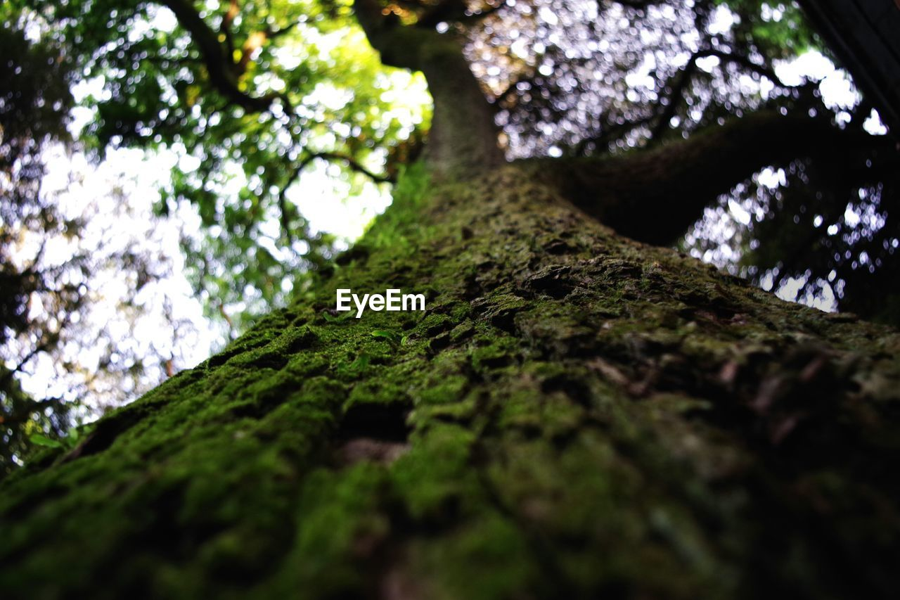 tree, low angle view, growth, nature, moss, tree trunk, day, beauty in nature, forest, outdoors, rock - object, no people, tranquility, branch, close-up, fungus