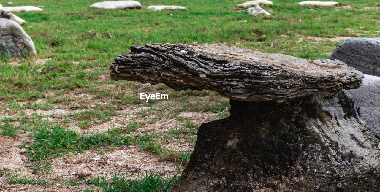 CLOSE-UP OF DRIFTWOOD ON FIELD
