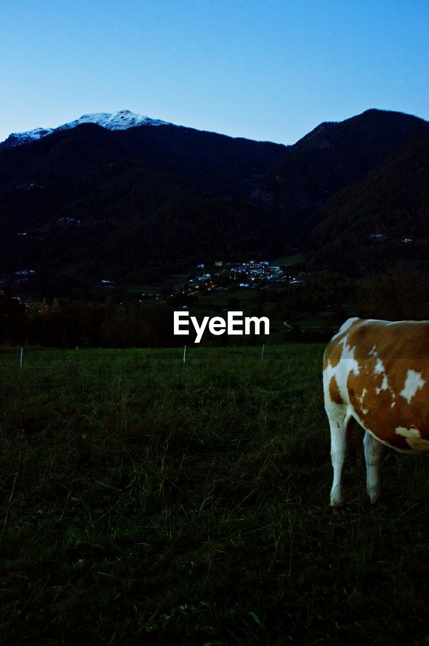 mountain, landscape, domestic animals, animal themes, field, grass, no people, nature, mammal, livestock, grazing, one animal, scenics, outdoors, tranquility, cow, tranquil scene, day, beauty in nature, farm animal, mountain range, rural scene, sky, clear sky, full length