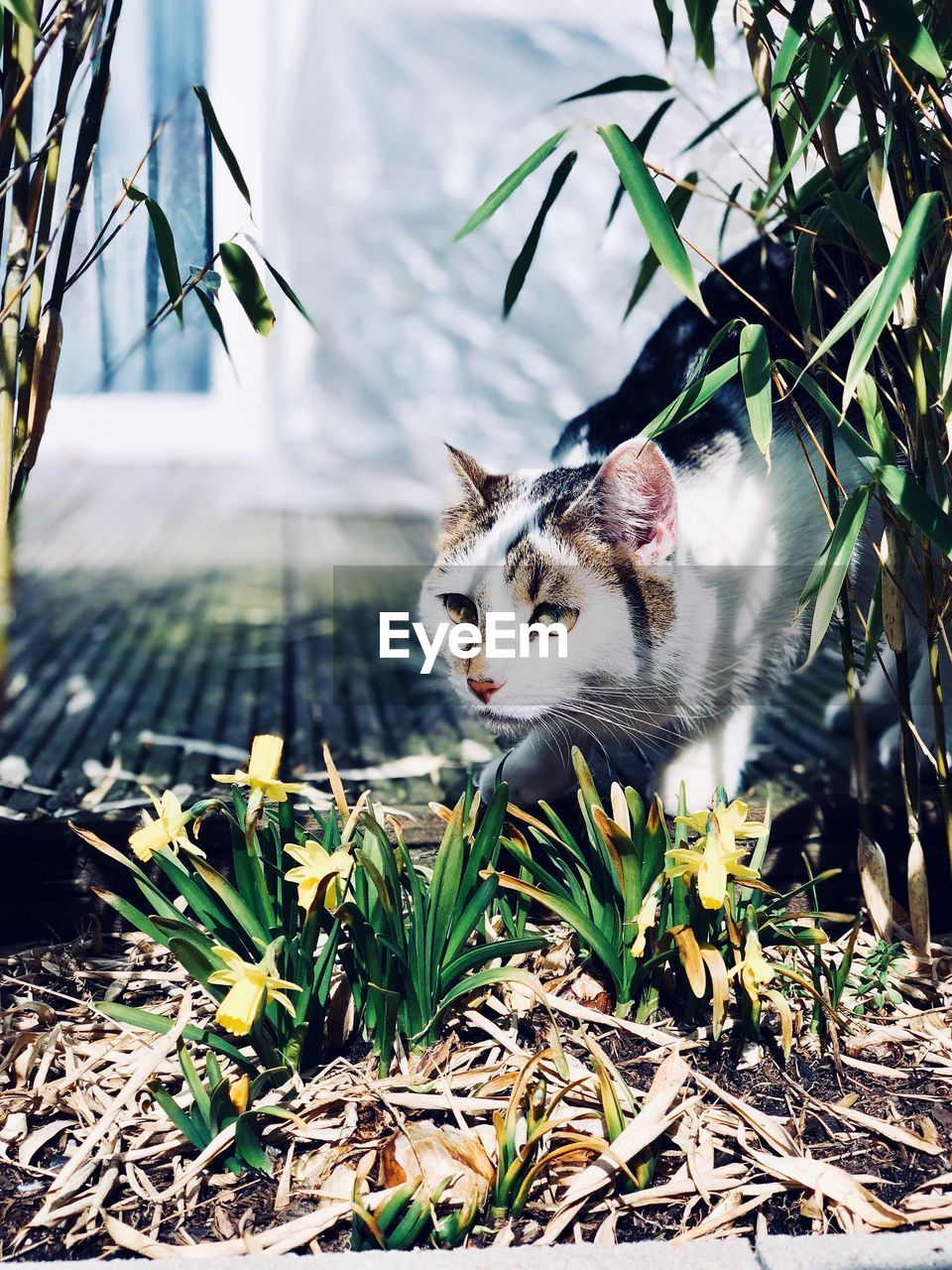 cat, one animal, domestic, feline, pets, animal themes, vertebrate, mammal, animal, plant, domestic animals, domestic cat, nature, no people, plant part, day, leaf, growth, looking away, looking, outdoors, whisker