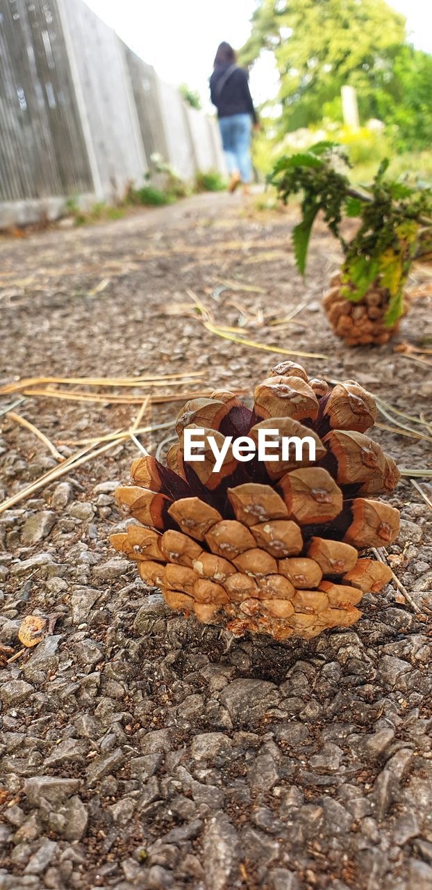 incidental people, focus on foreground, day, nature, close-up, food and drink, food, outdoors, abundance, nut, large group of objects, wood - material, nut - food, land, field, sunlight, brown, tree, heap, group, surface level