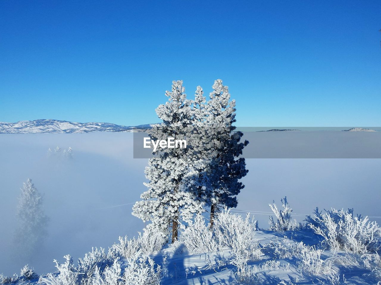 cold temperature, snow, winter, plant, beauty in nature, sky, tree, nature, blue, tranquility, tranquil scene, copy space, clear sky, scenics - nature, no people, day, frozen, white color, non-urban scene, outdoors, snowcapped mountain, extreme weather, coniferous tree, fir tree