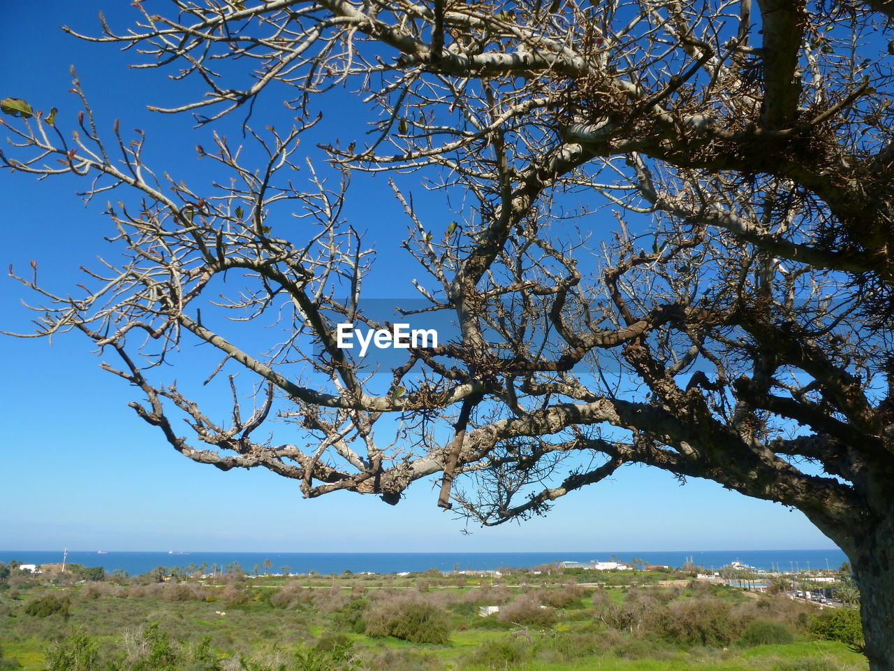 SCENIC VIEW OF TREE BY SEA AGAINST CLEAR SKY