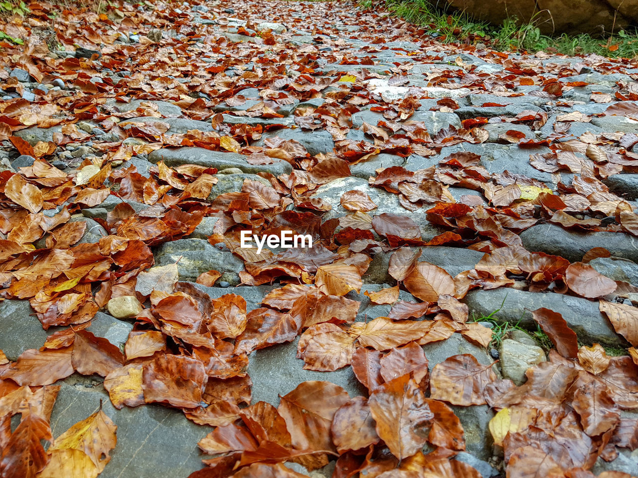 leaf, plant part, day, change, autumn, dry, leaves, no people, nature, abundance, land, full frame, field, backgrounds, beauty in nature, close-up, outdoors, falling, high angle view, plant, natural condition, surface level, fall