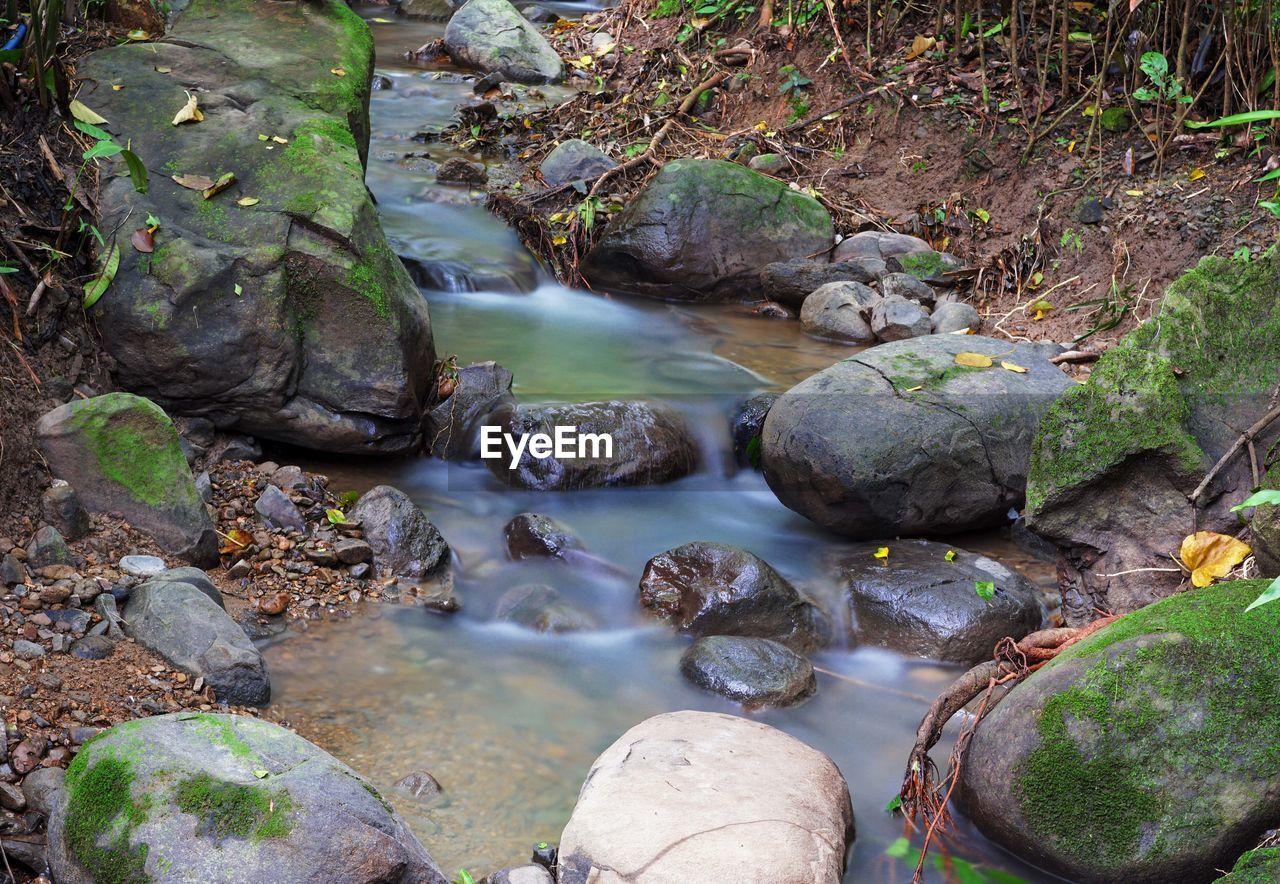 water, rock, solid, rock - object, long exposure, forest, nature, flowing water, scenics - nature, day, beauty in nature, land, flowing, no people, tree, river, motion, plant, stone, outdoors, stream - flowing water, shallow, pebble