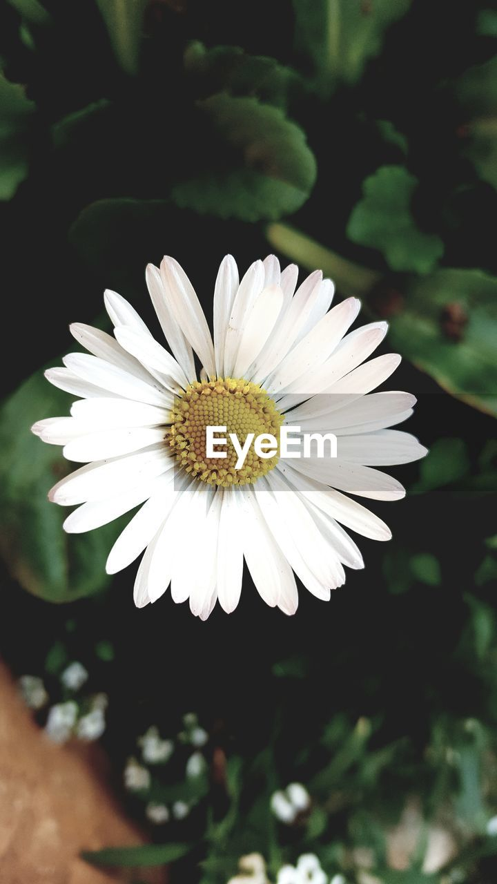 flower, petal, white color, beauty in nature, fragility, nature, flower head, growth, freshness, plant, close-up, focus on foreground, day, no people, blooming, outdoors