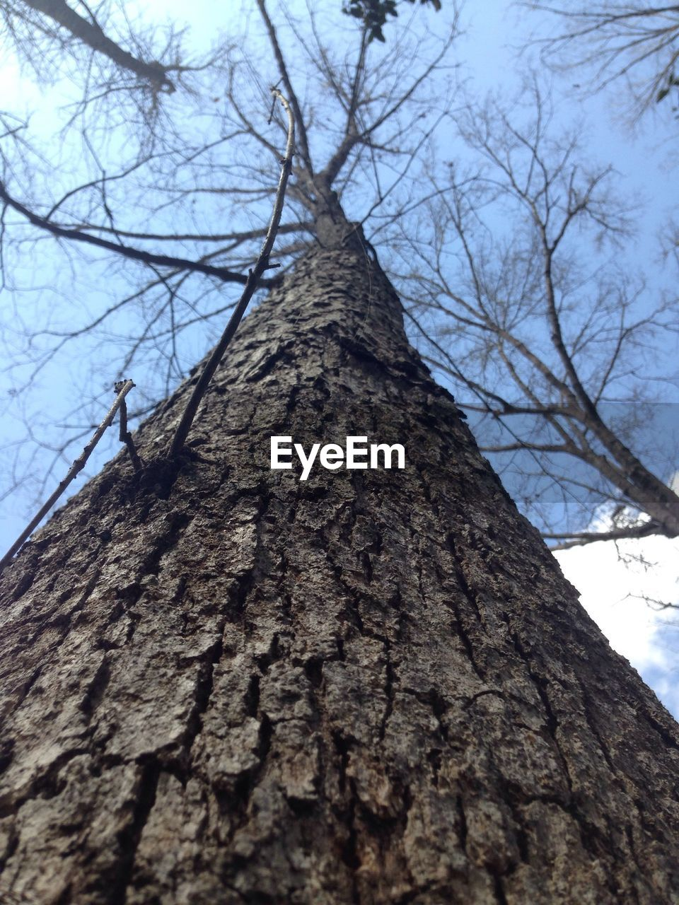 tree, tree trunk, low angle view, branch, bare tree, day, textured, nature, no people, bark, growth, sky, outdoors, beauty in nature, close-up, dead tree