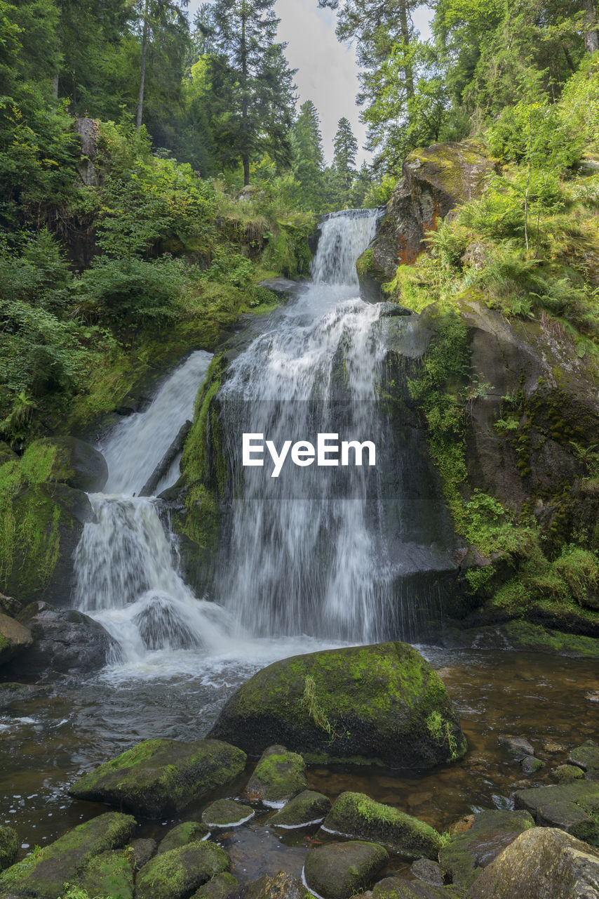 waterfall, forest, water, scenics, nature, tree, beauty in nature, no people, day, outdoors, growth, motion